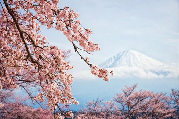 """РСТ: """"Облегчение визового режима с Японией увеличит поток туристов более чем на 10%"""""""
