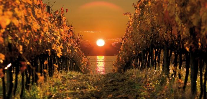 Словения делится по винодельческим регионам