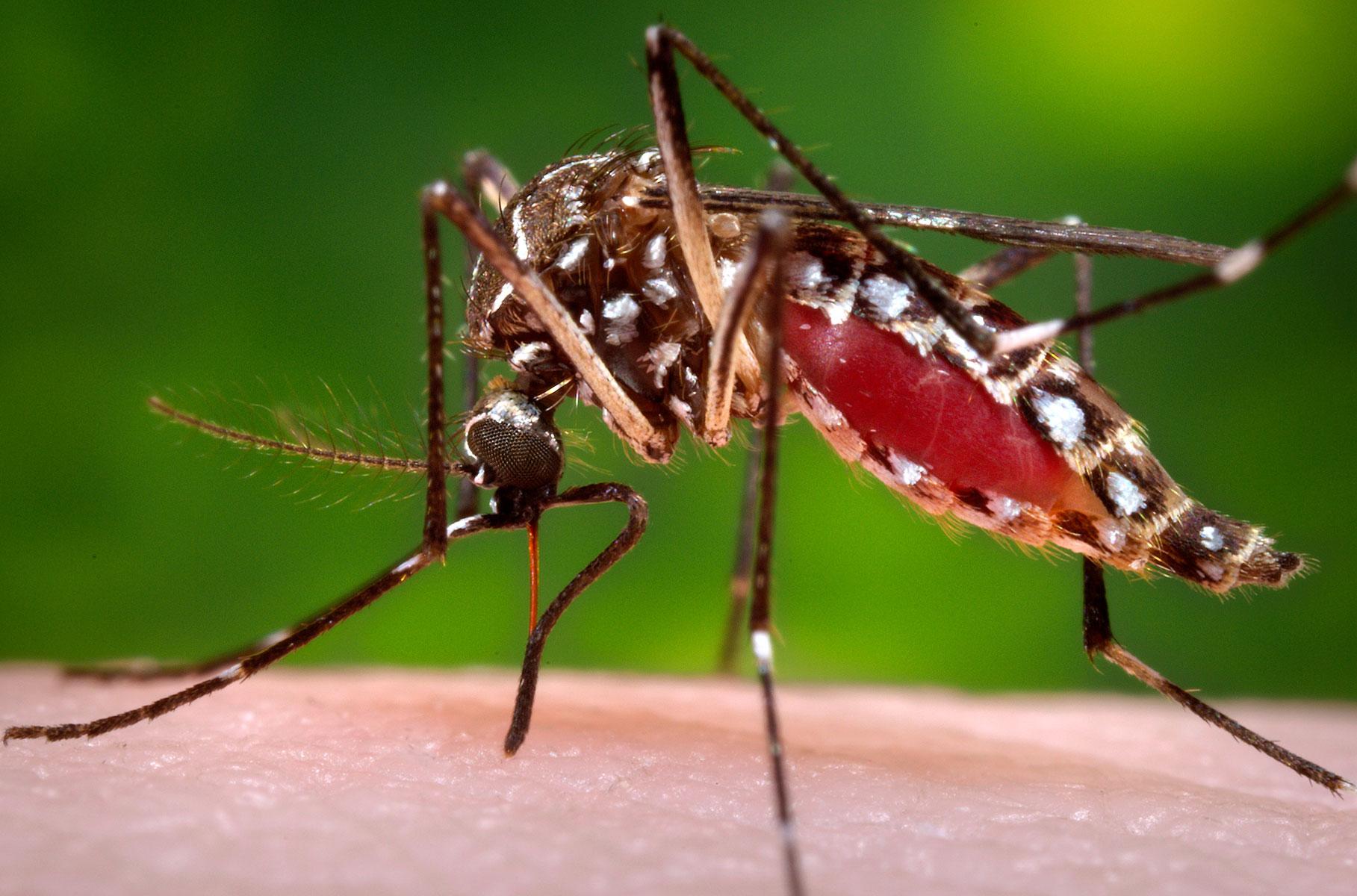 МИД предупреждает россиян олихорадке денге вБразилии