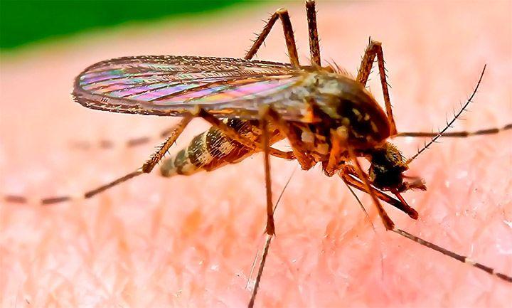 Туристическое управление Таиланда представило последние данные обэпидемиологической ситуации полихорадке денге встране