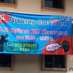 Как заработать в Тайланде