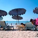 Лежаки и зонтики на Пхукете возвращают